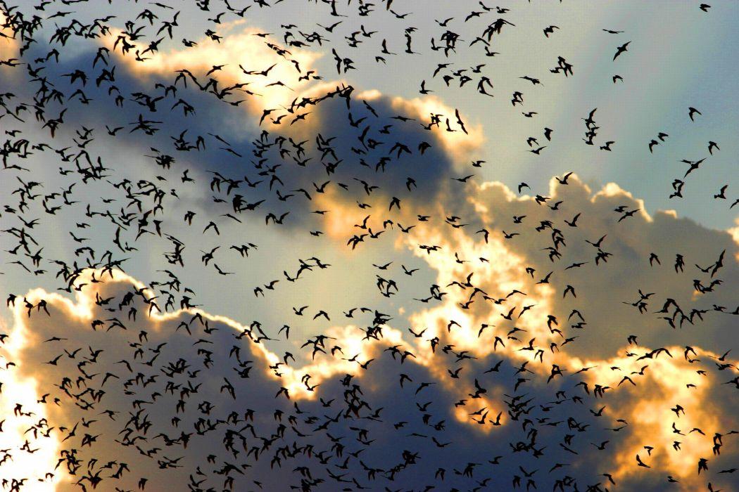 Flock of Birds sky bokeh (1) wallpaper