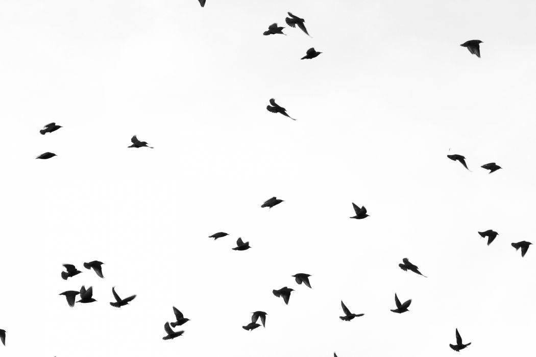 Flock of Birds sky bokeh (4)_JPG wallpaper