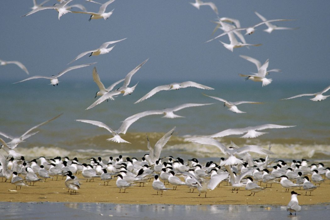 Flock of Birds sky bokeh (6) wallpaper