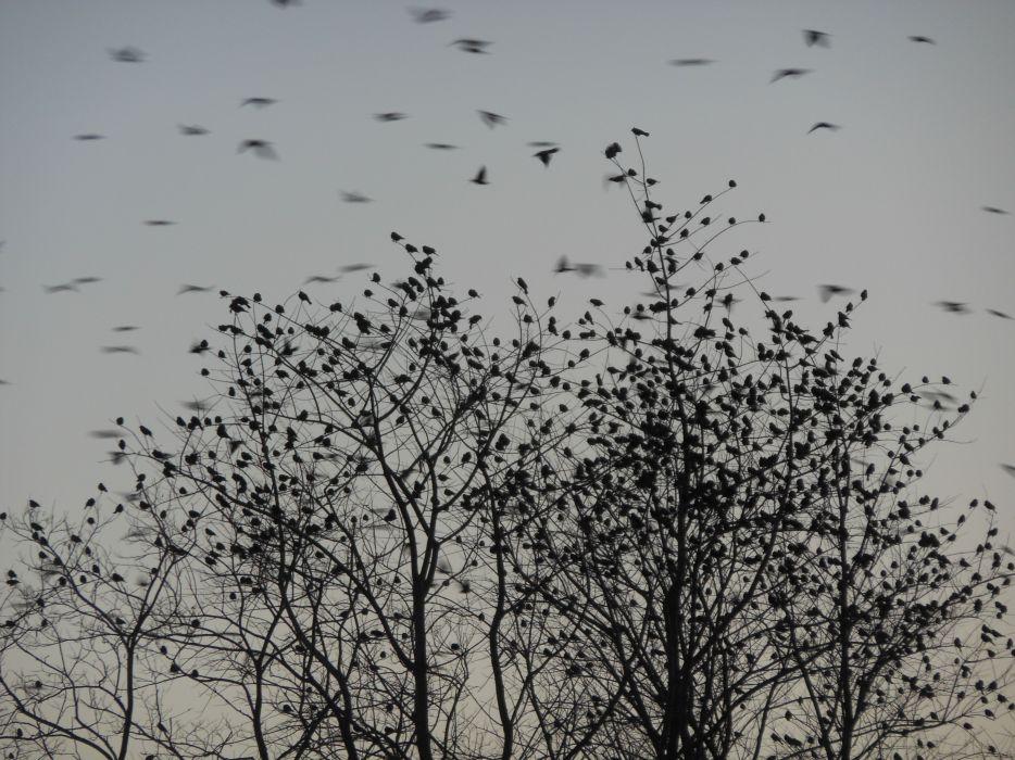 Flock of Birds sky bokeh (10) wallpaper
