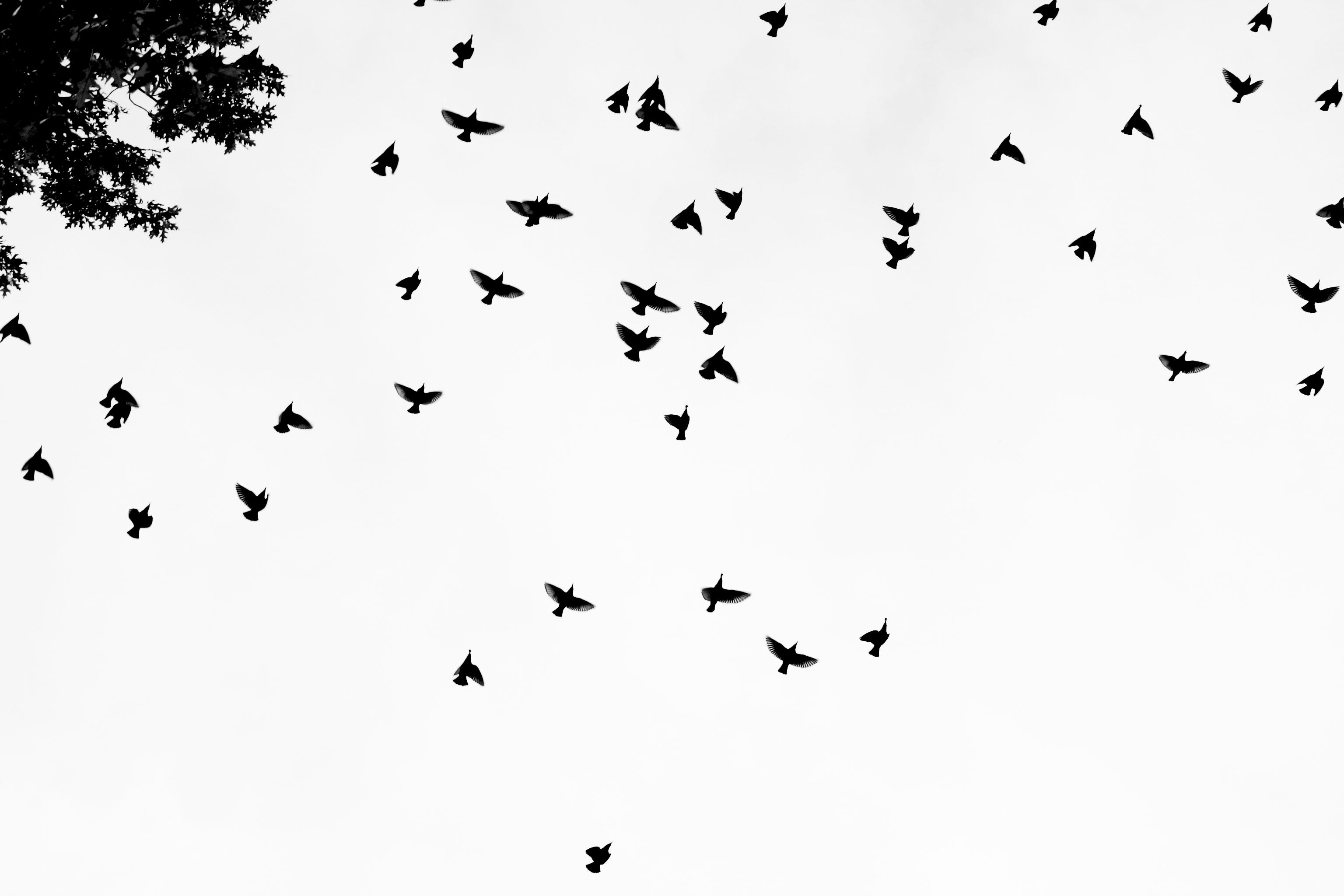 Flock Of Birds Sky Bokeh 13jpg Wallpaper 3072x2048 219274