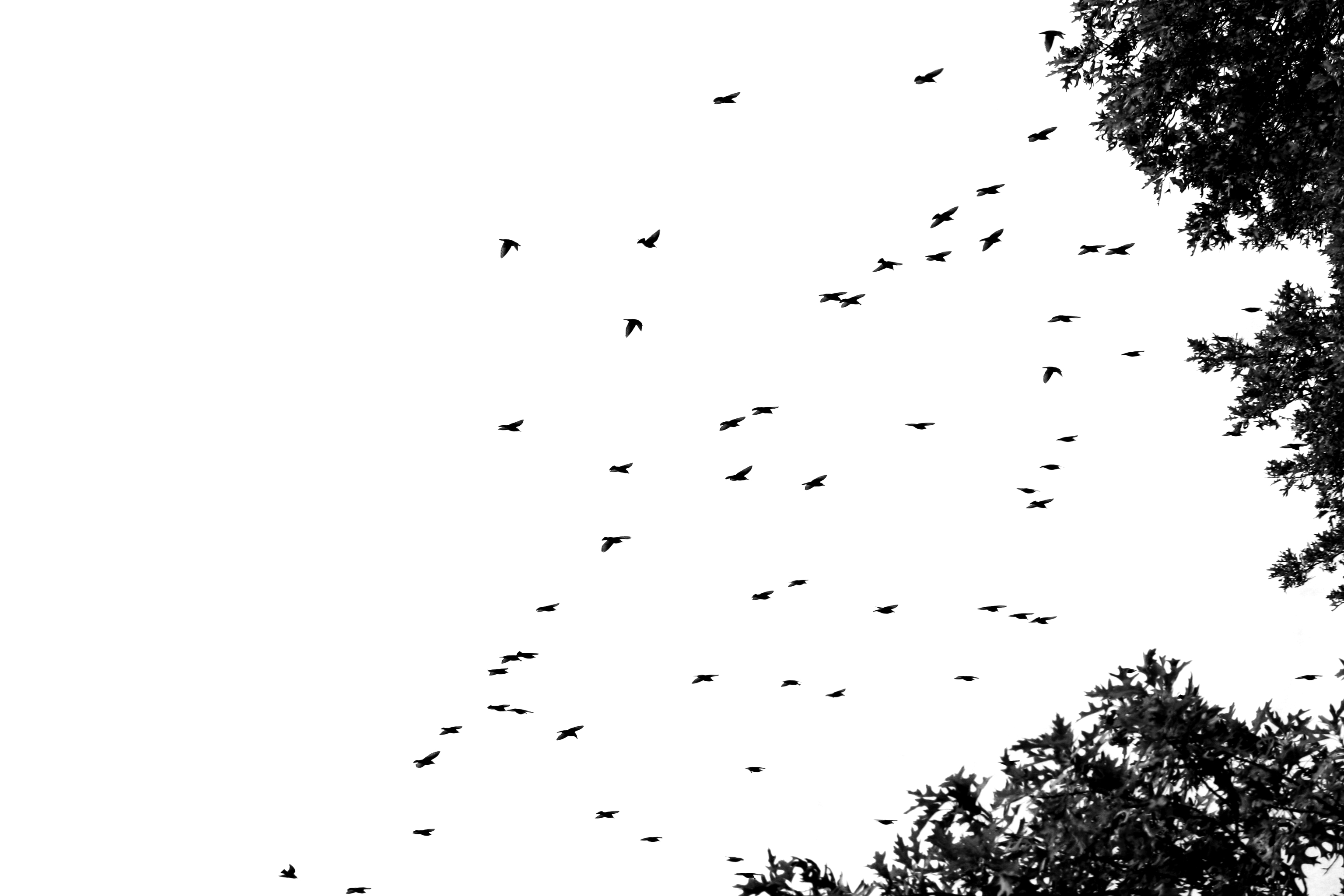 Flock Of Birds Sky Bokeh 14jpg Wallpaper 3072x2048 219275