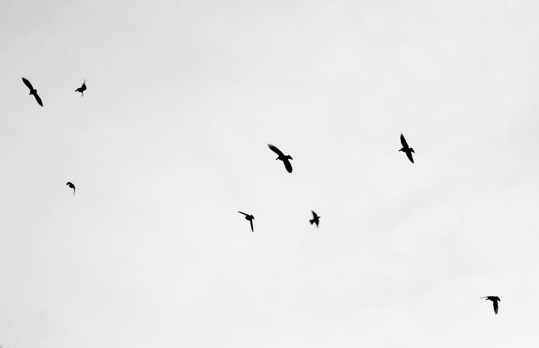 Flock of Birds sky bokeh (15)_JPG wallpaper
