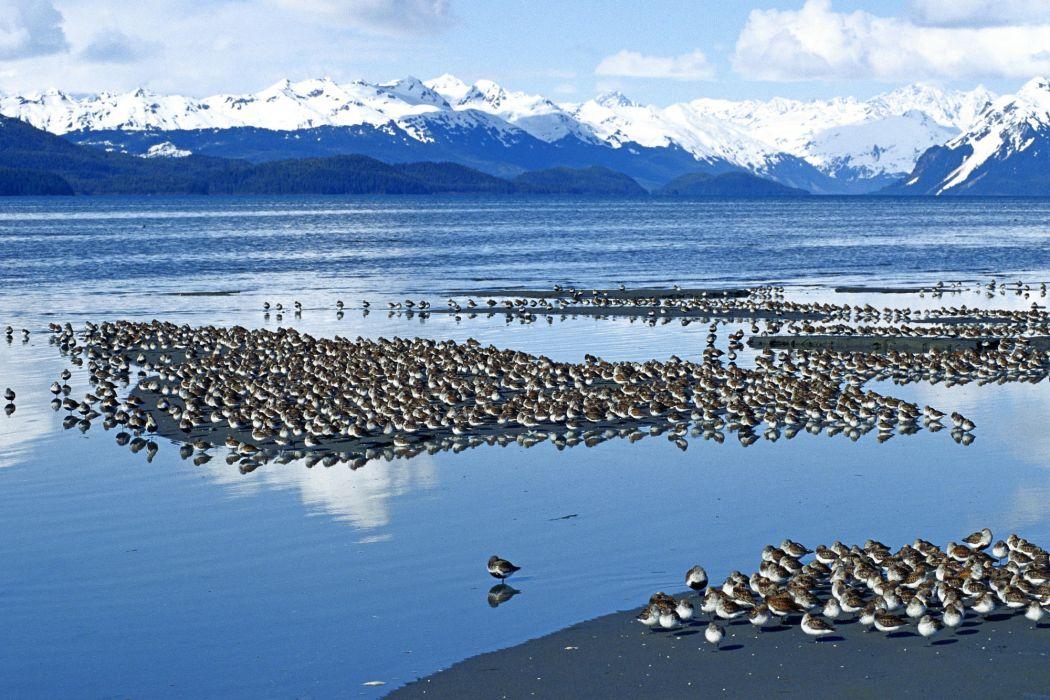 Flock of Birds sky bokeh (23) wallpaper