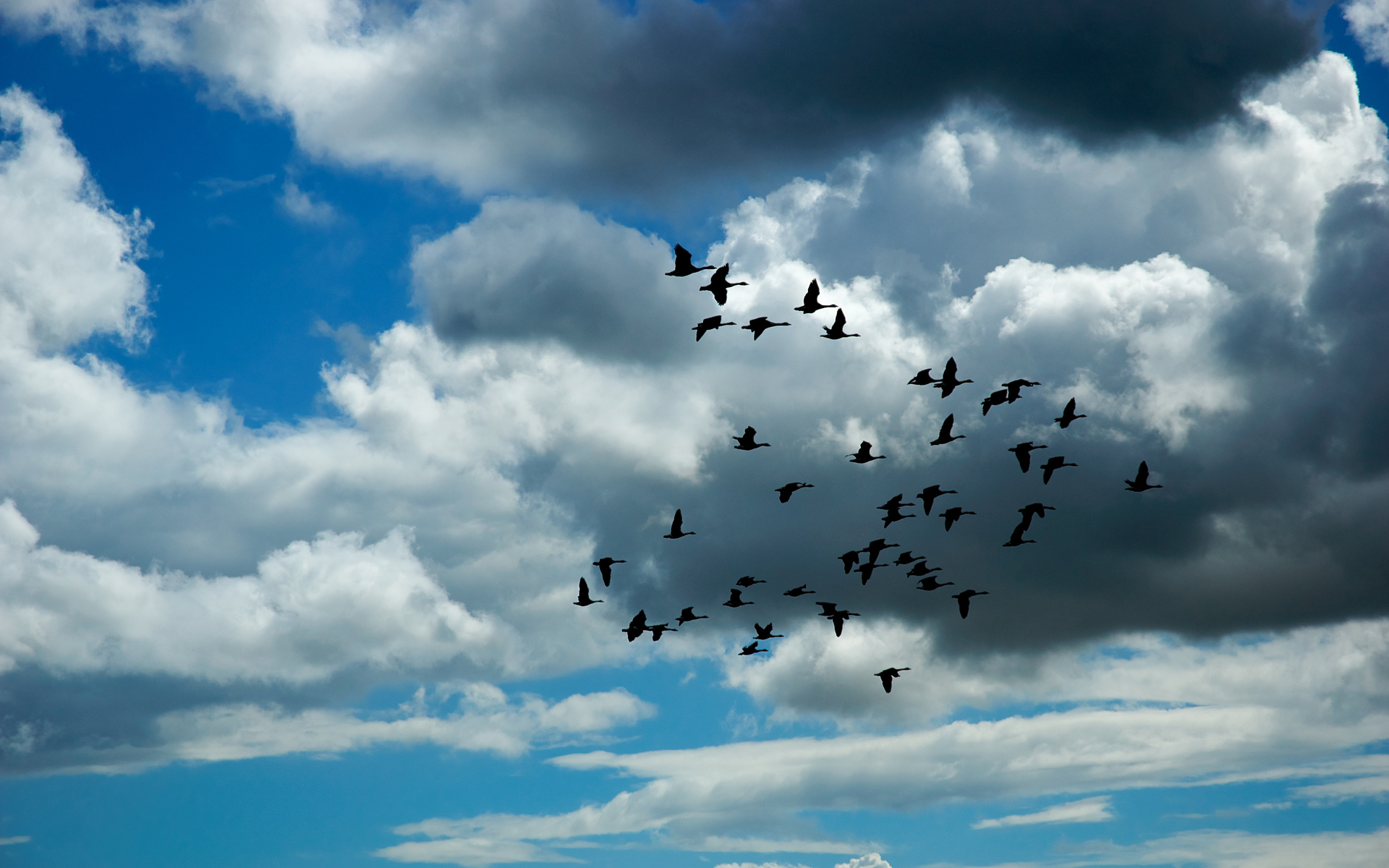 Wallpapers Hd Flying Birds Apple Animals Blue Sky Desktop: Flock Of Birds Sky Bokeh (28) Wallpaper