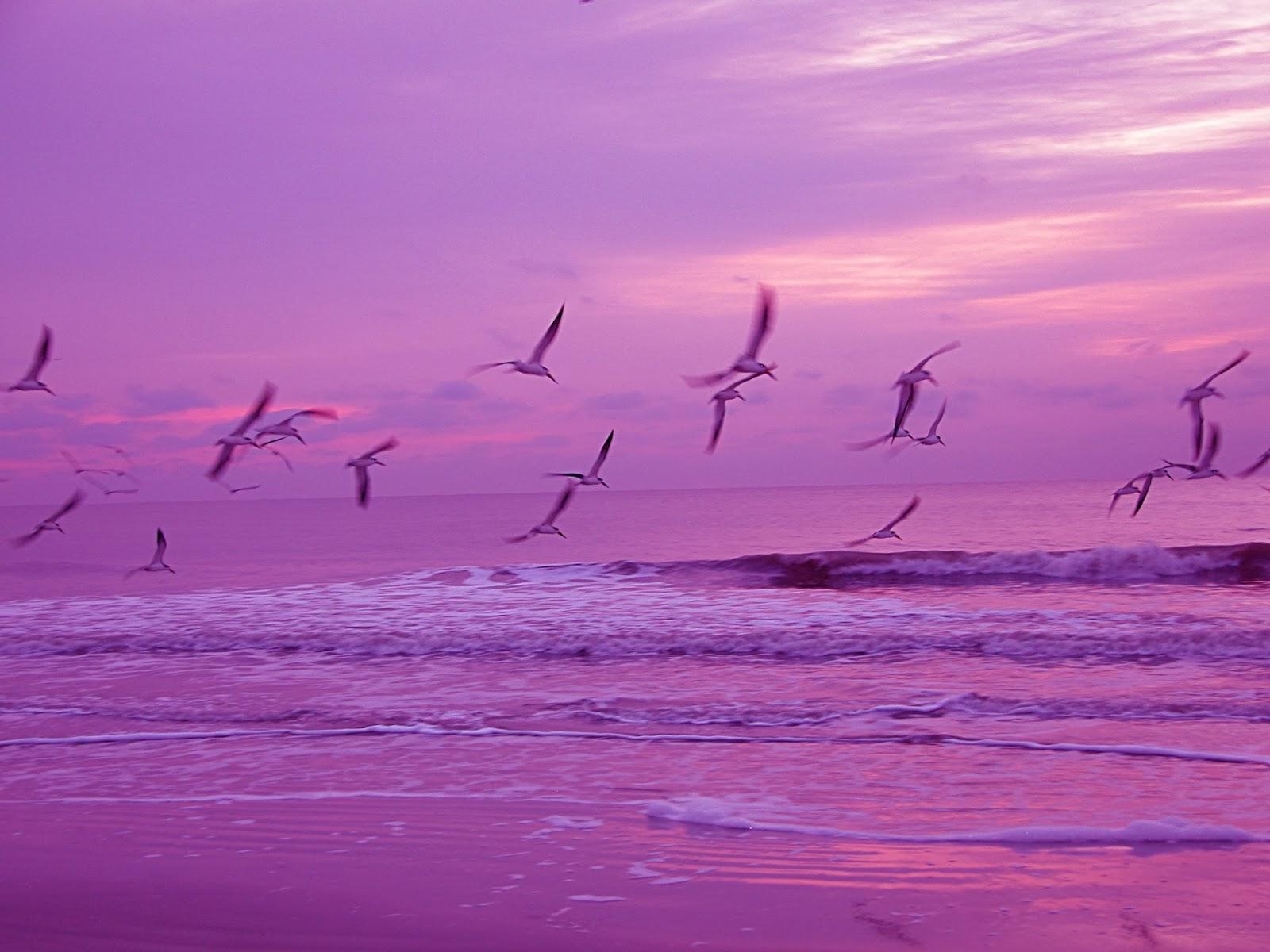 Wallpapers Hd Flying Birds Apple Animals Blue Sky Desktop: Flock Of Birds Sky Bokeh (35) Wallpaper