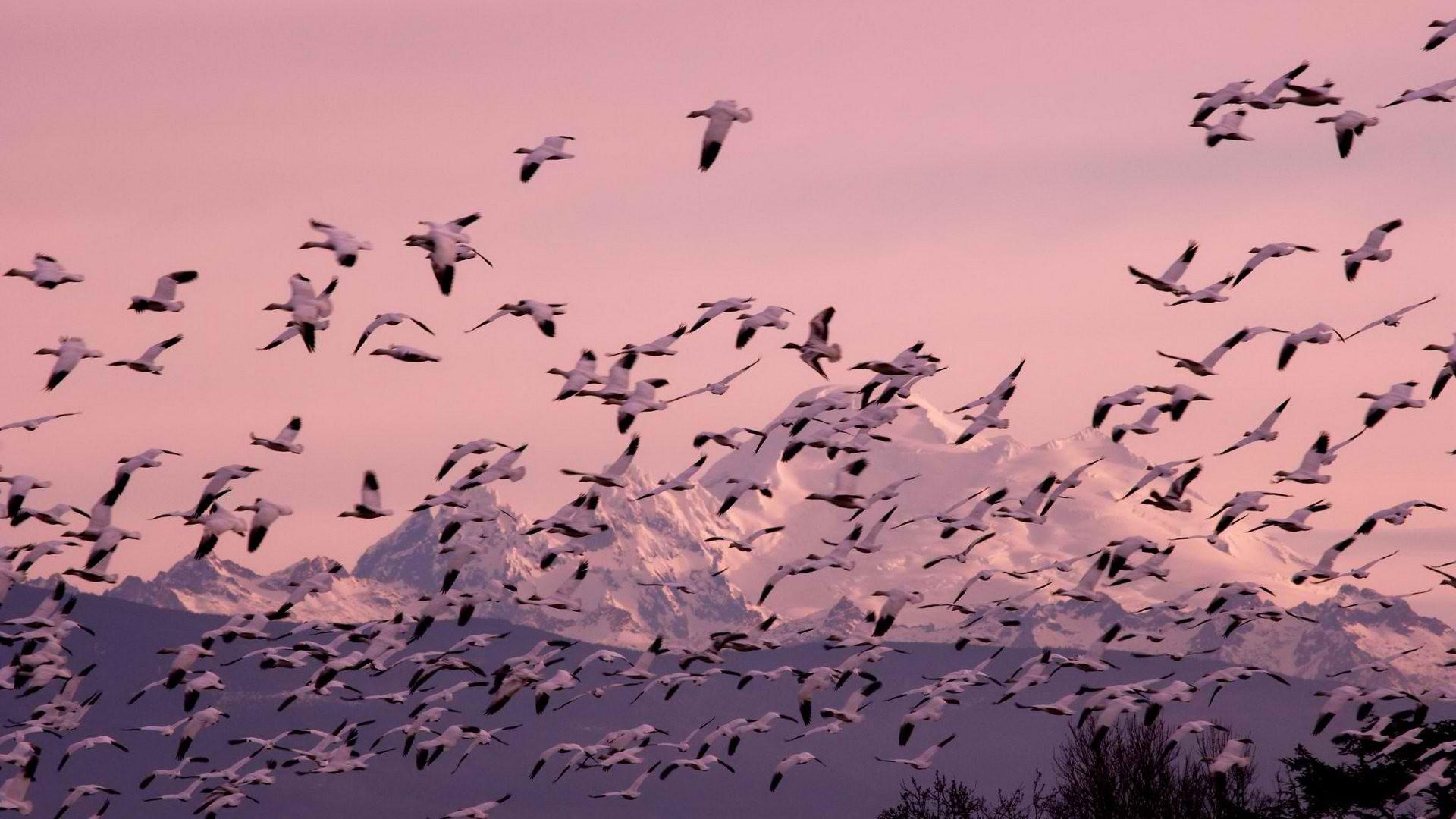 Flock Of Birds Sky Bokeh 41 Wallpaper 1920x1080 219299
