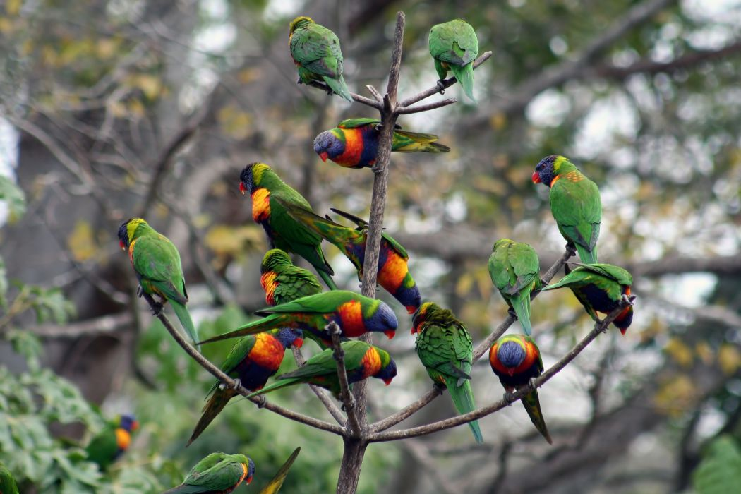 Flock of Birds sky bokeh parrot (22) wallpaper