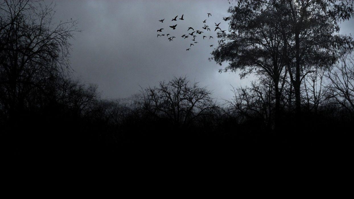 flock-of-birds-over-the-trees-11620 wallpaper