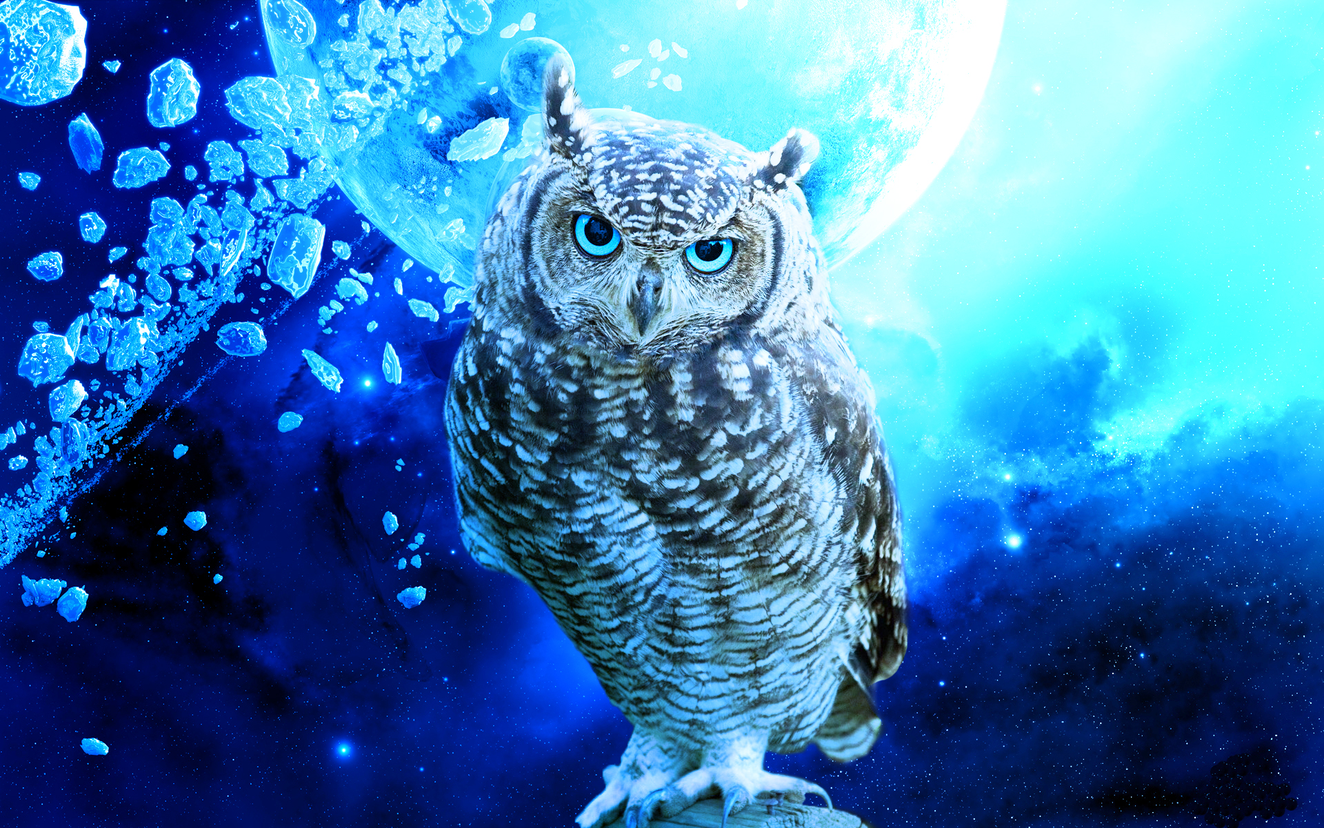 Owl Bird Stars Debris Blue Planet wallpaper | 1920x1200 | 219383