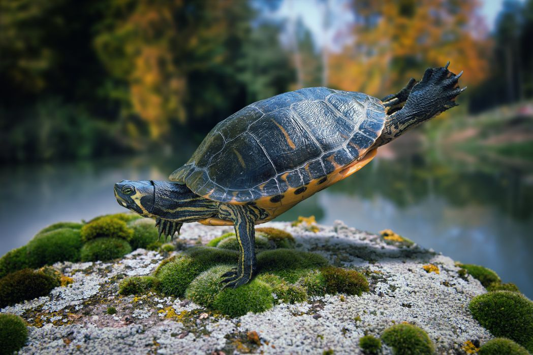 turtle breakdance wallpaper