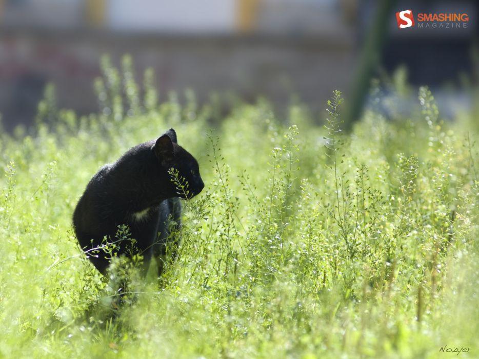 nature cats animals grass depth of field wallpaper