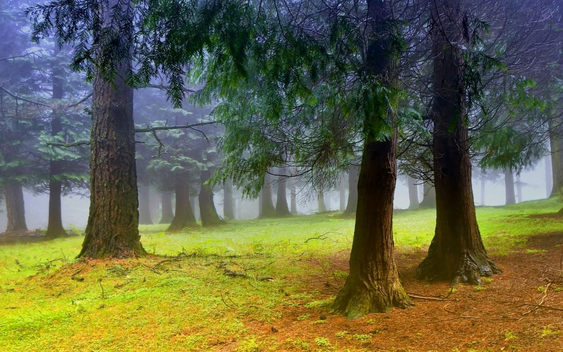 green nature trees forests outdoors wallpaper