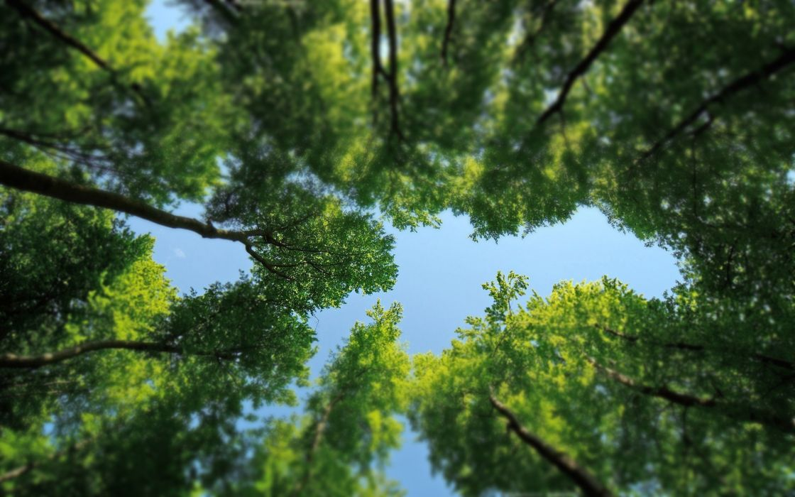 nature trees forests skyscapes wallpaper
