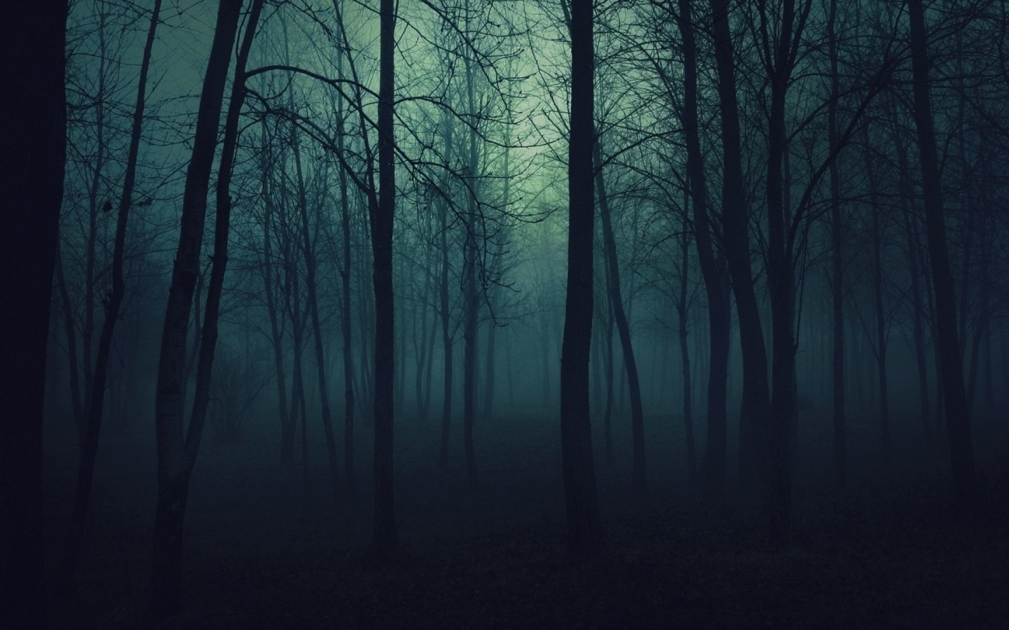 Dark Nature Wallpaper nature trees dark forests fog