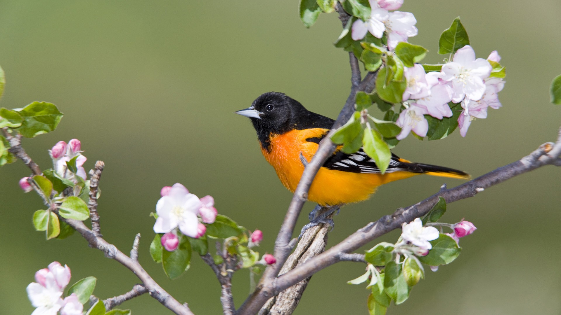 Iphone Spring Birds Wallpaper Total Update