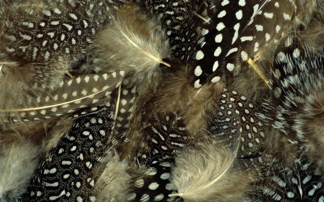 feathers macro wallpaper