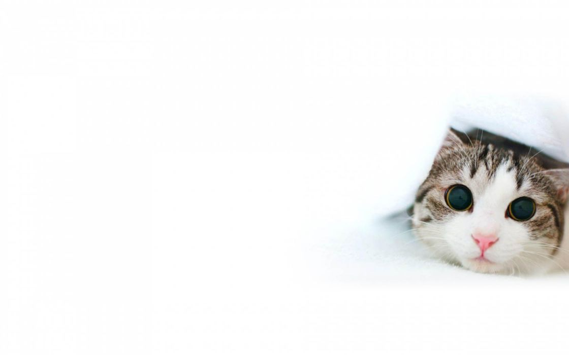 cats simple background wallpaper