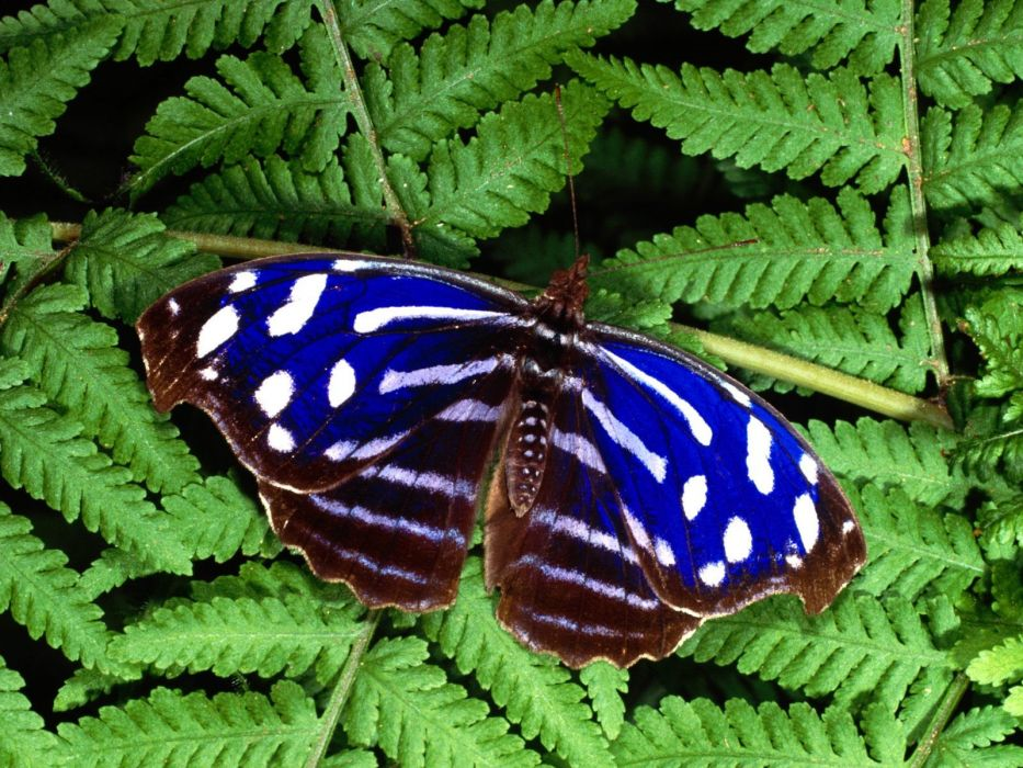 green nature multicolor insects butterflies wallpaper