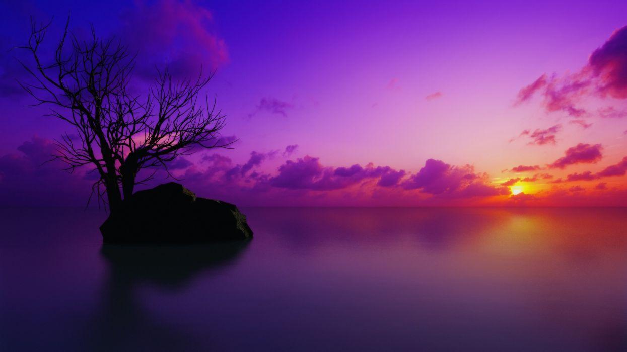 trees purple wallpaper