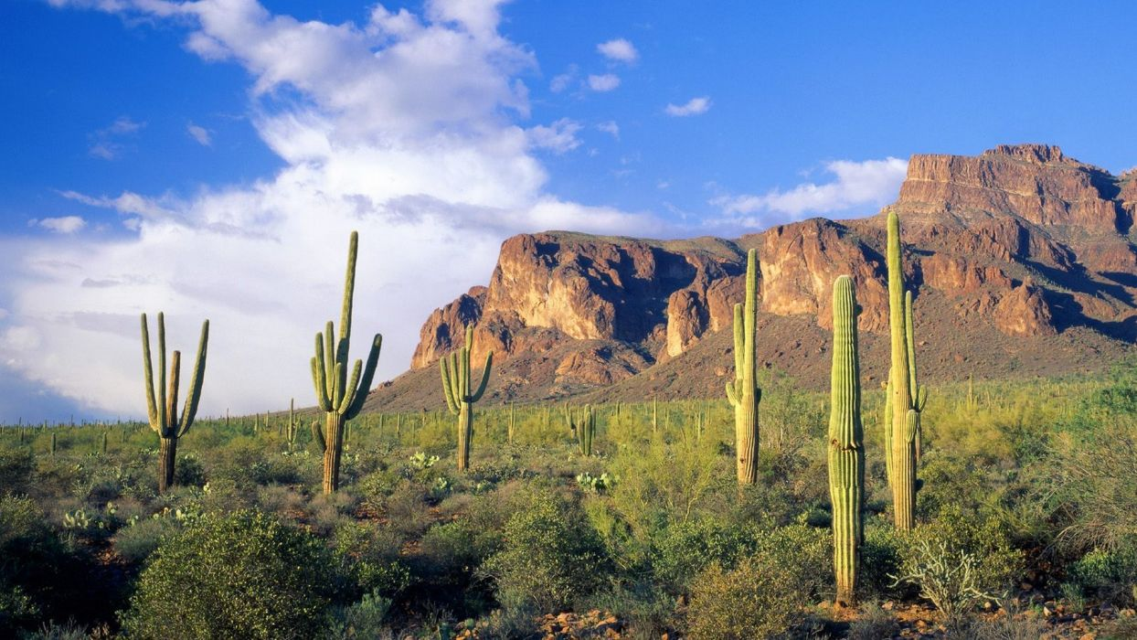 mountains clouds landscapes forests Arizona national cactus Tonto wallpaper