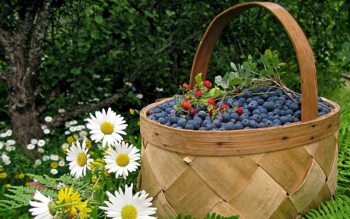 fruits food baskets ferns blueberries white flowers daisies food art wallpaper