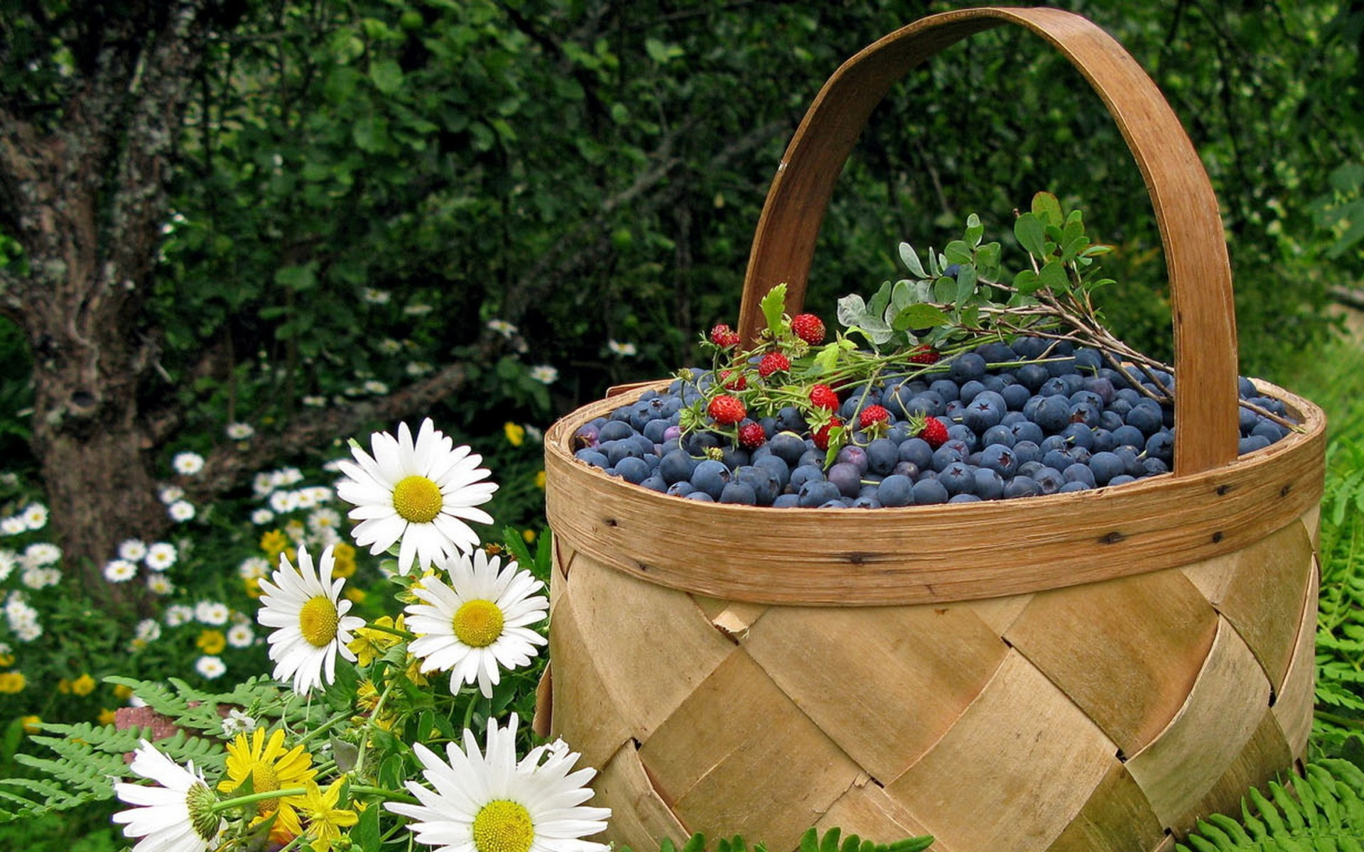 Fruits food baskets ferns blueberries white flowers ...