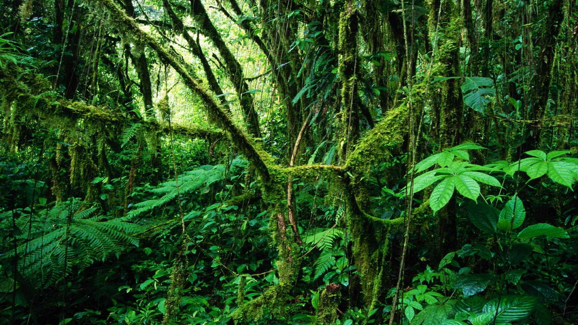 Messages >> Costa Rica rainforest wallpaper | 1920x1080 | 219891 | WallpaperUP
