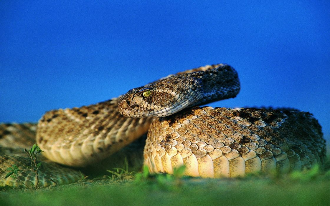 snakes reptiles wallpaper