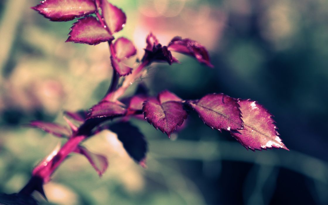plants Flora wallpaper
