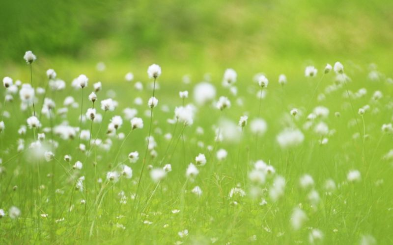 green nature meadows wallpaper