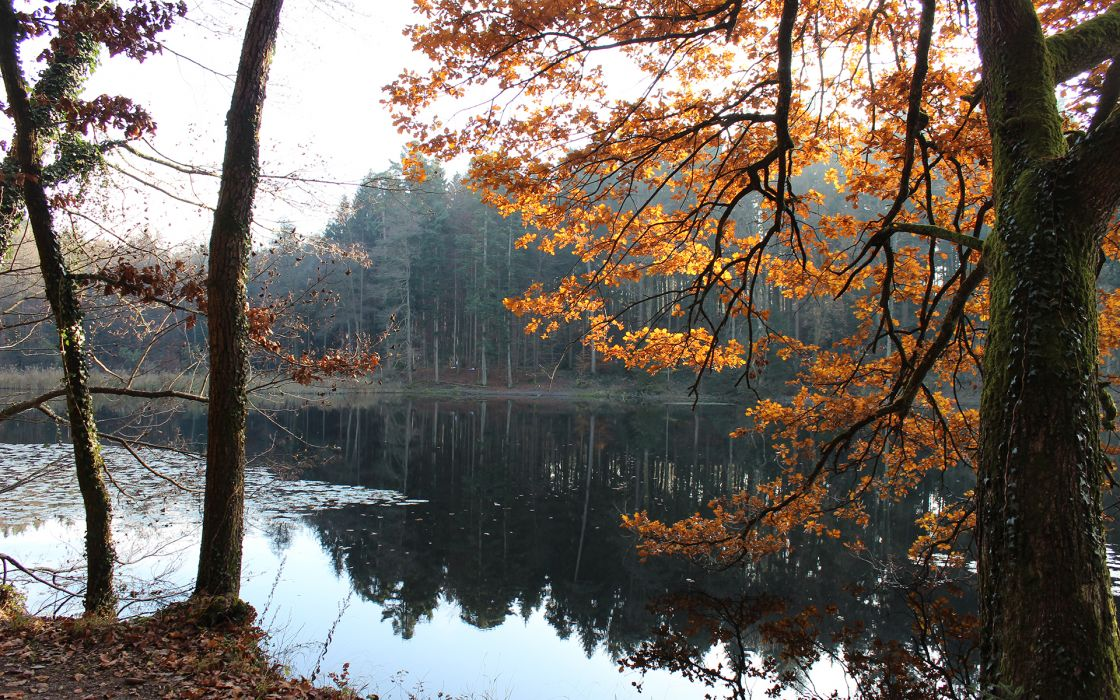 Lake Trees Autumn Reflection Forest wallpaper