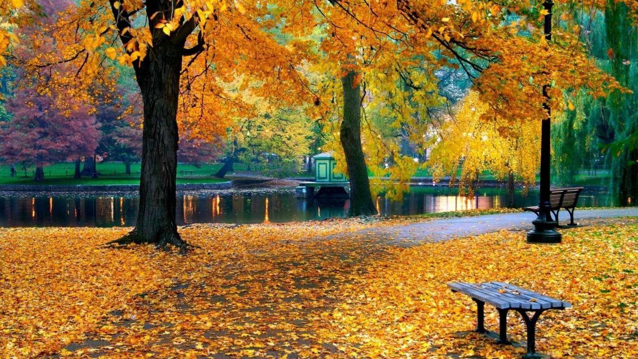 foliage nature trees autumn park wallpaper