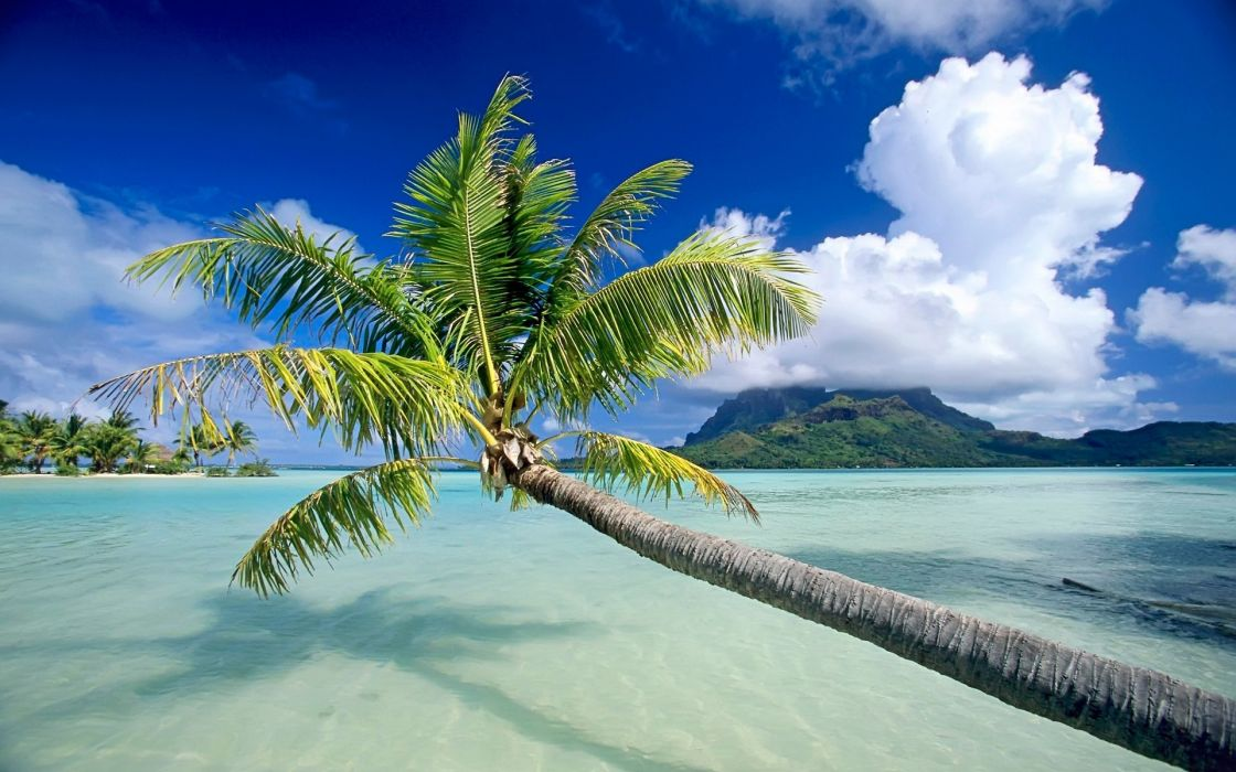 hanging beach sand sea palm wallpaper