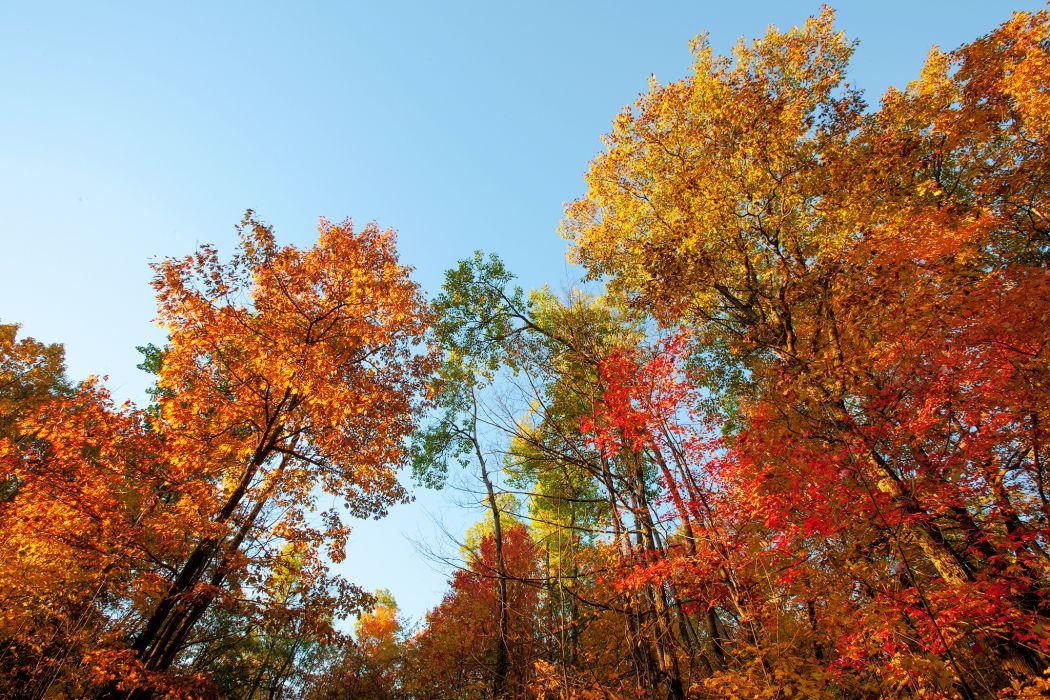autumn trees nature wallpaper
