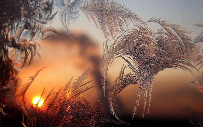 winter patterns glass morning sun frost wallpaper