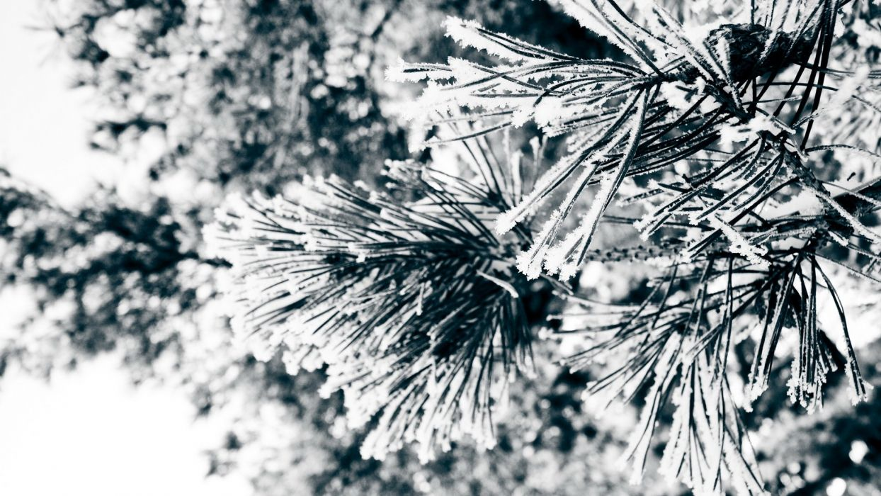 nature winter snow trees frozen wallpaper