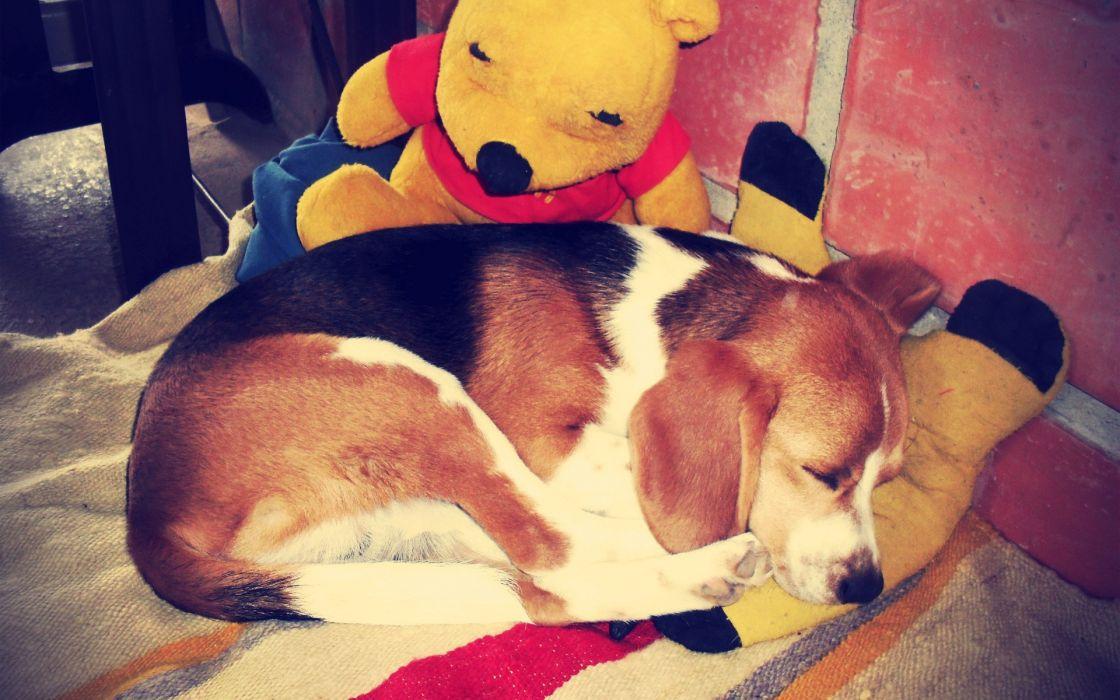 dogs sleeping Winnie The Poo wallpaper