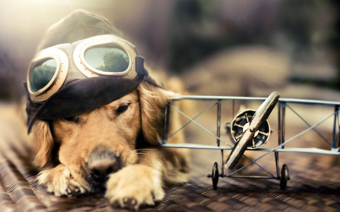 aircraft animals dogs Pilot toys (children) goggles widescreen wallpaper