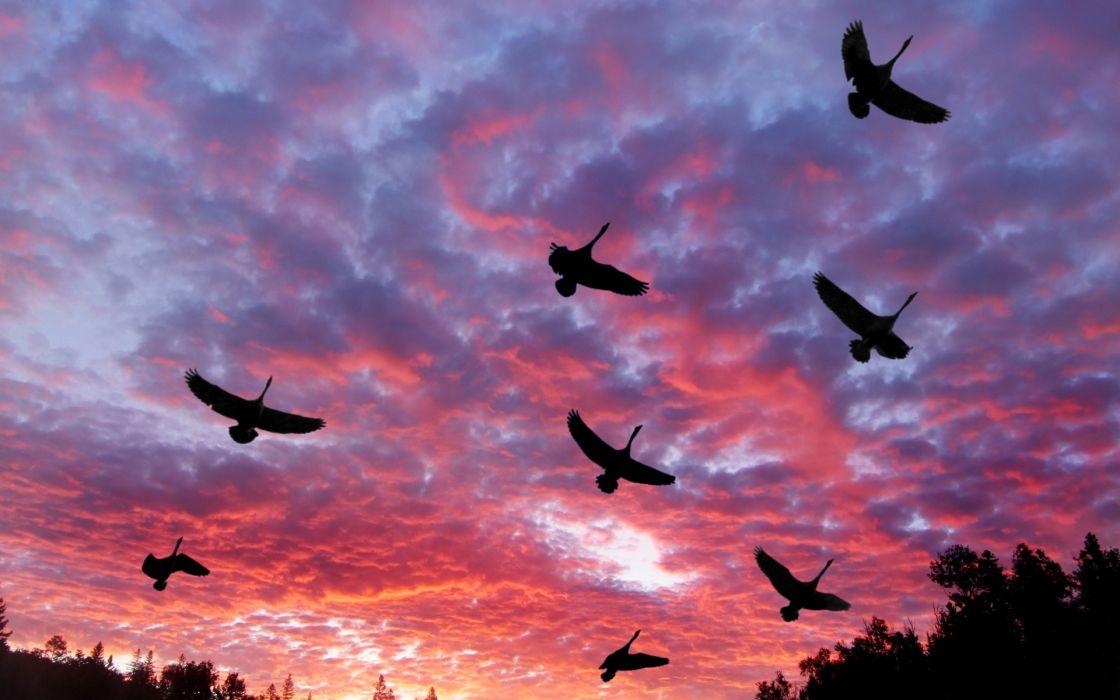 clouds landscapes birds wallpaper