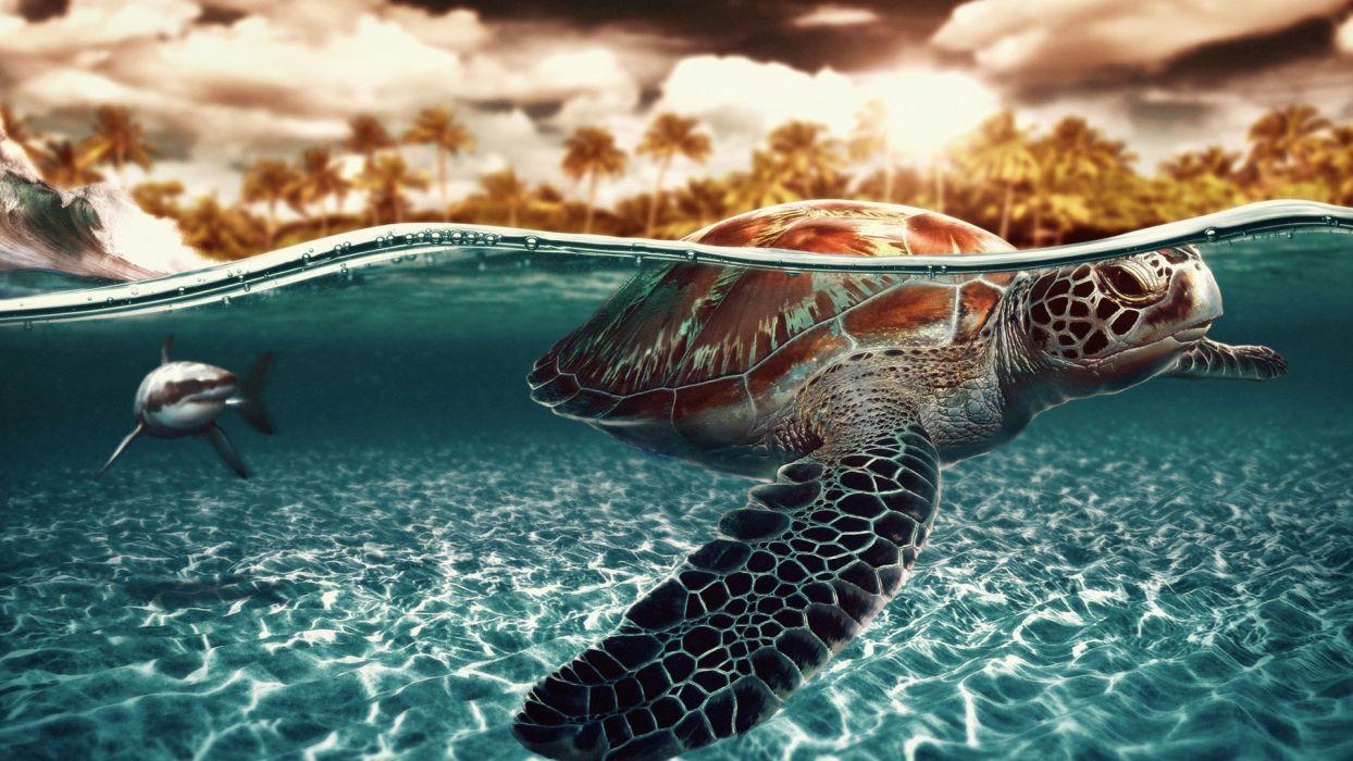 animals turtles sharks artwork split-view wallpaper