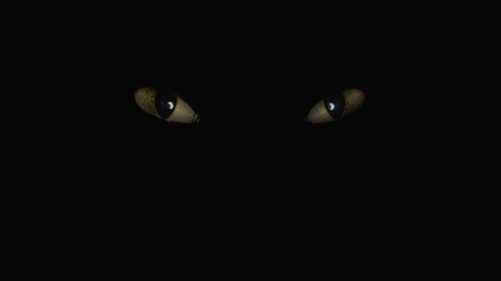 обои на рабочий стол глаза кошки на темном фоне № 237973  скачать