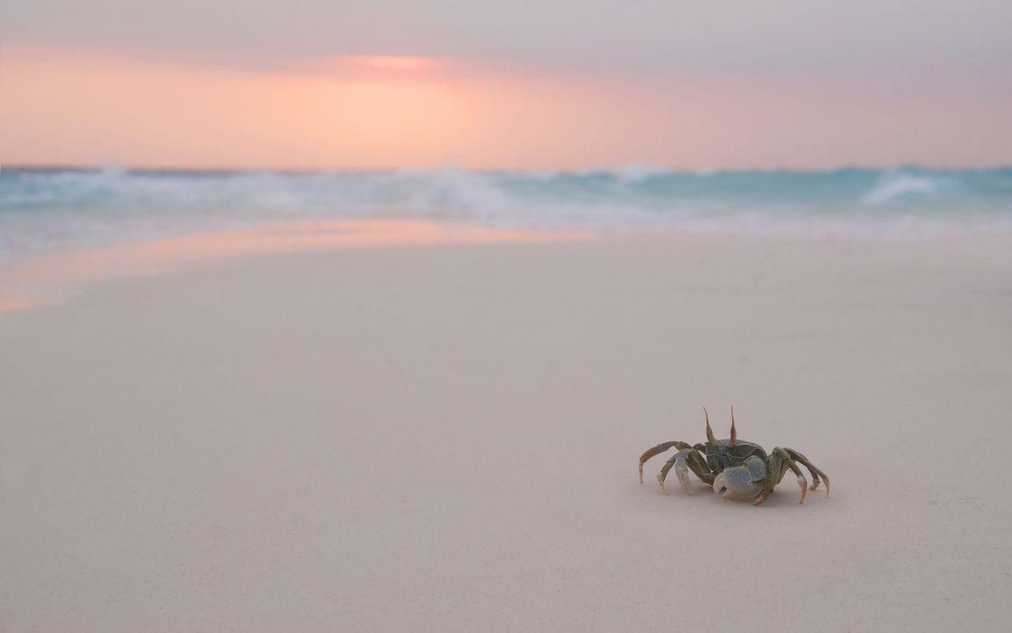 landscapes nature crabs beaches wallpaper