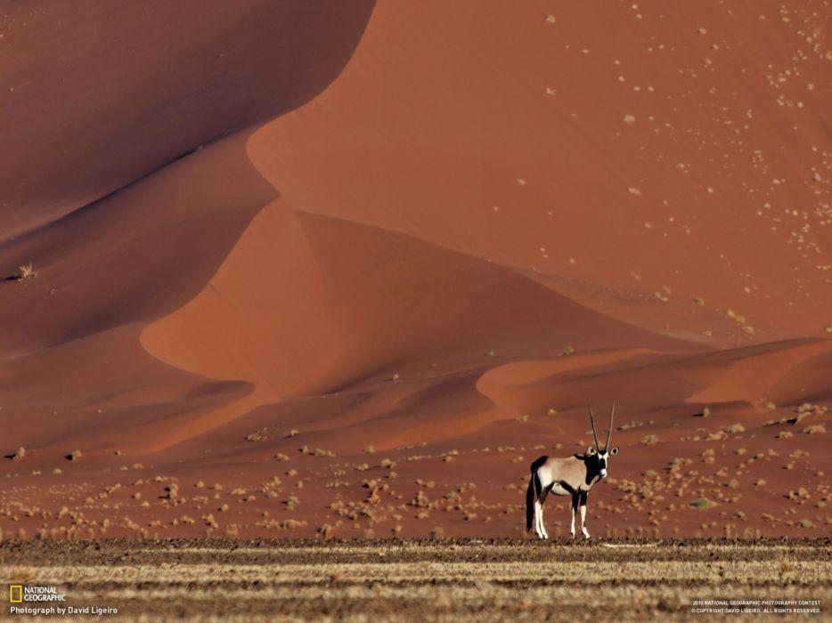 landscapes nature animals deserts National Geographic antelope Namib Desert wallpaper