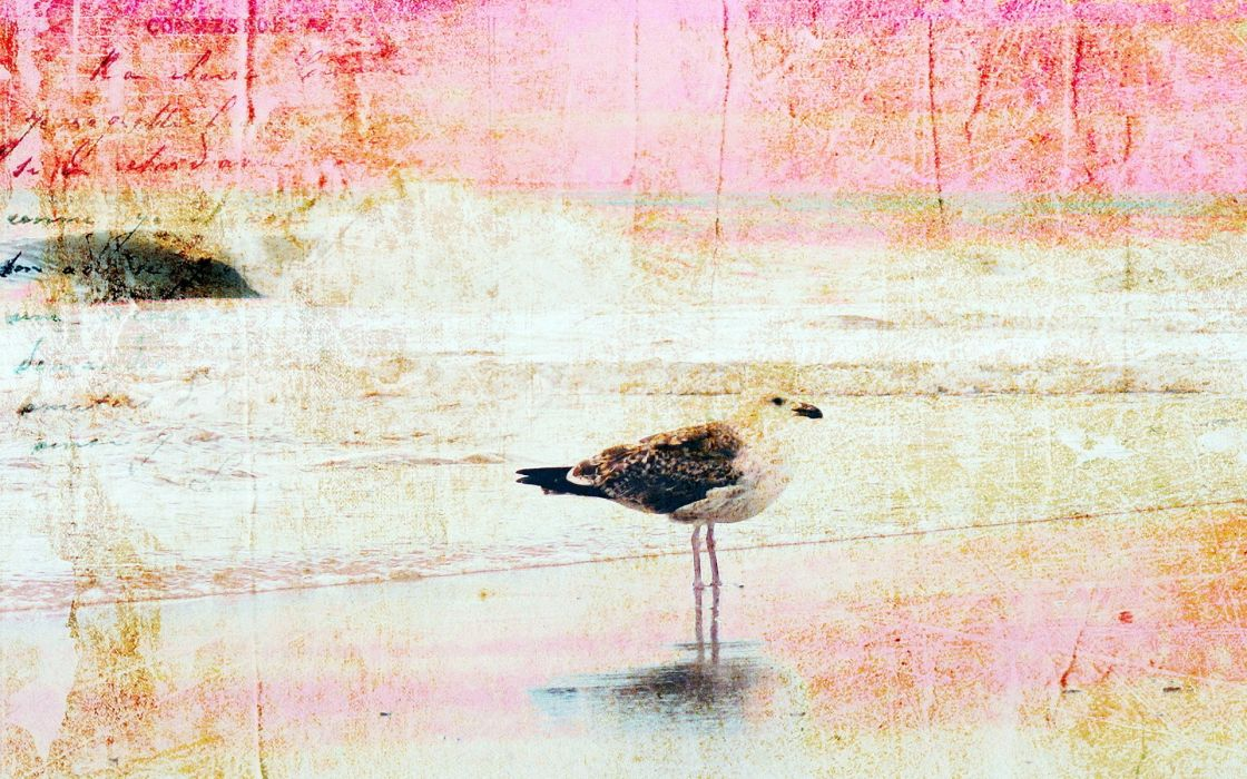 paintings birds artwork wallpaper
