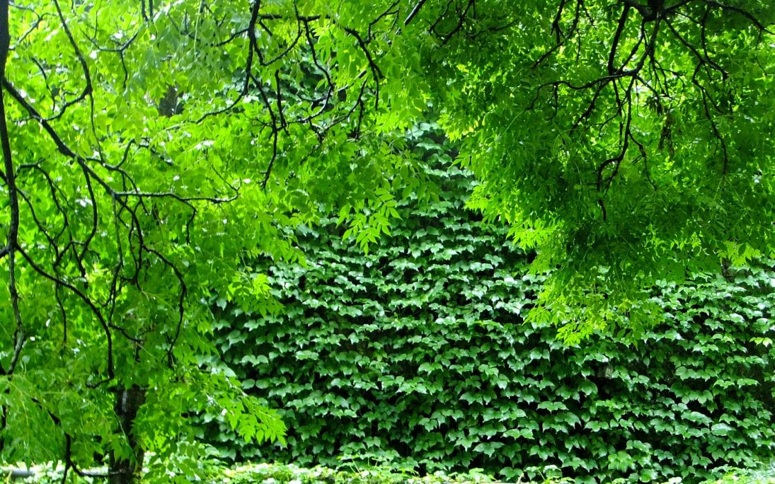 green nature trees plants branches wallpaper