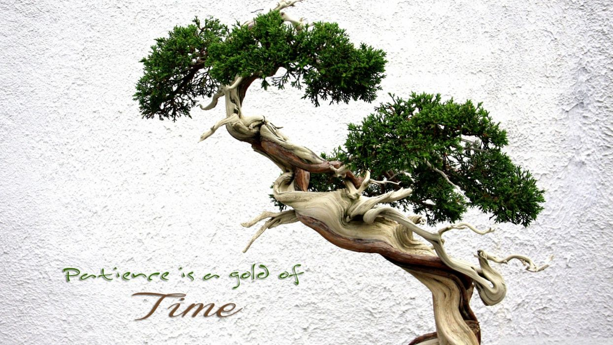 trees gold patience time wallpaper