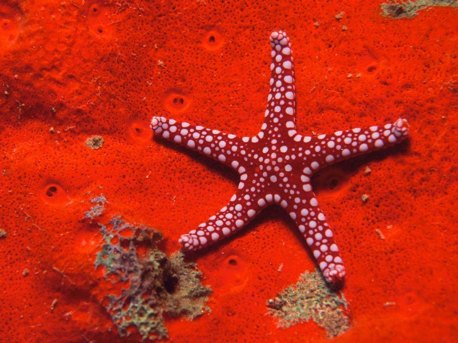 nature starfish wallpaper