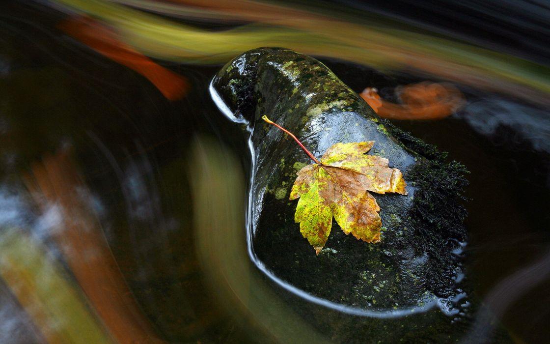 nature leaves rocks wallpaper