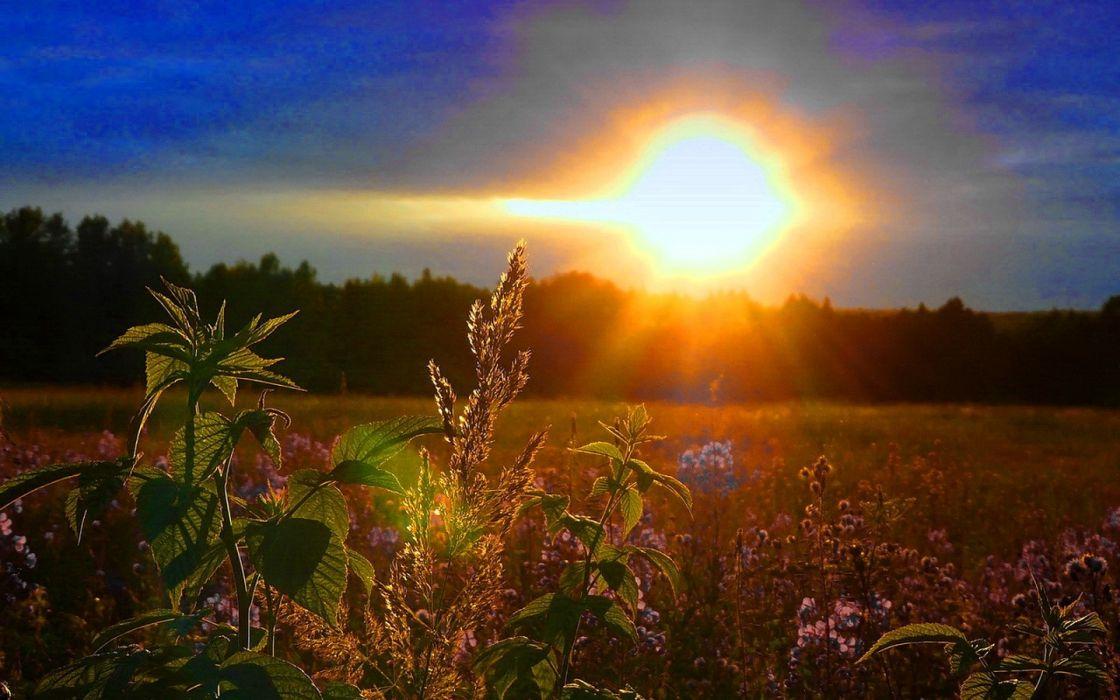 sunrise nature wallpaper